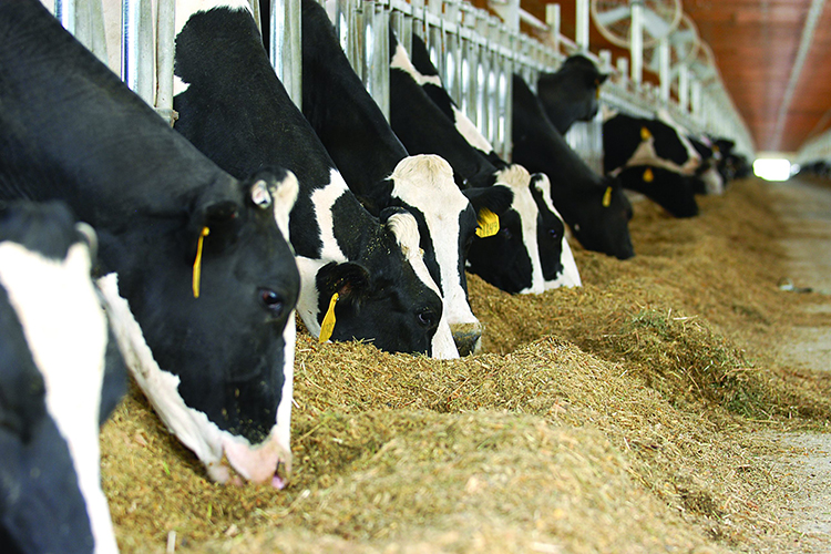 COVID-19's Impact on Animal Feed Industry